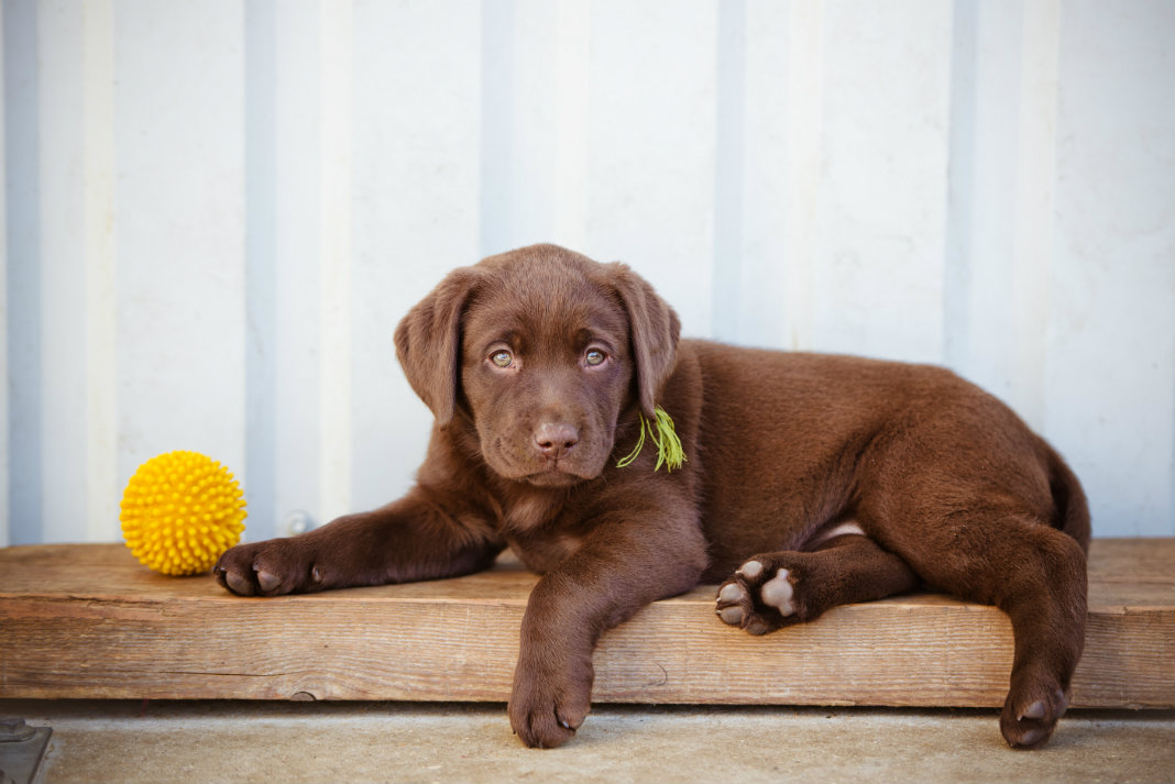 Don't Make These Rookie Puppy Mistakes
