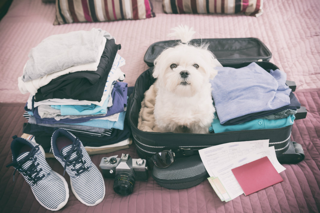 Four Tips On Travelling By Car With Your Dog