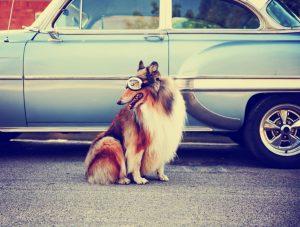 dog-w-goggles-wwl