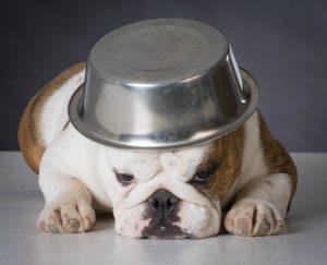 english-bulldog-with-dog-food-wwl