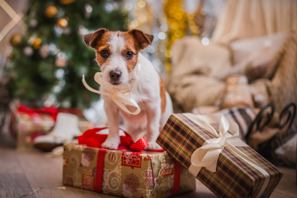 Holiday Dangers For Your Dog – What to look for & how to avoid them.