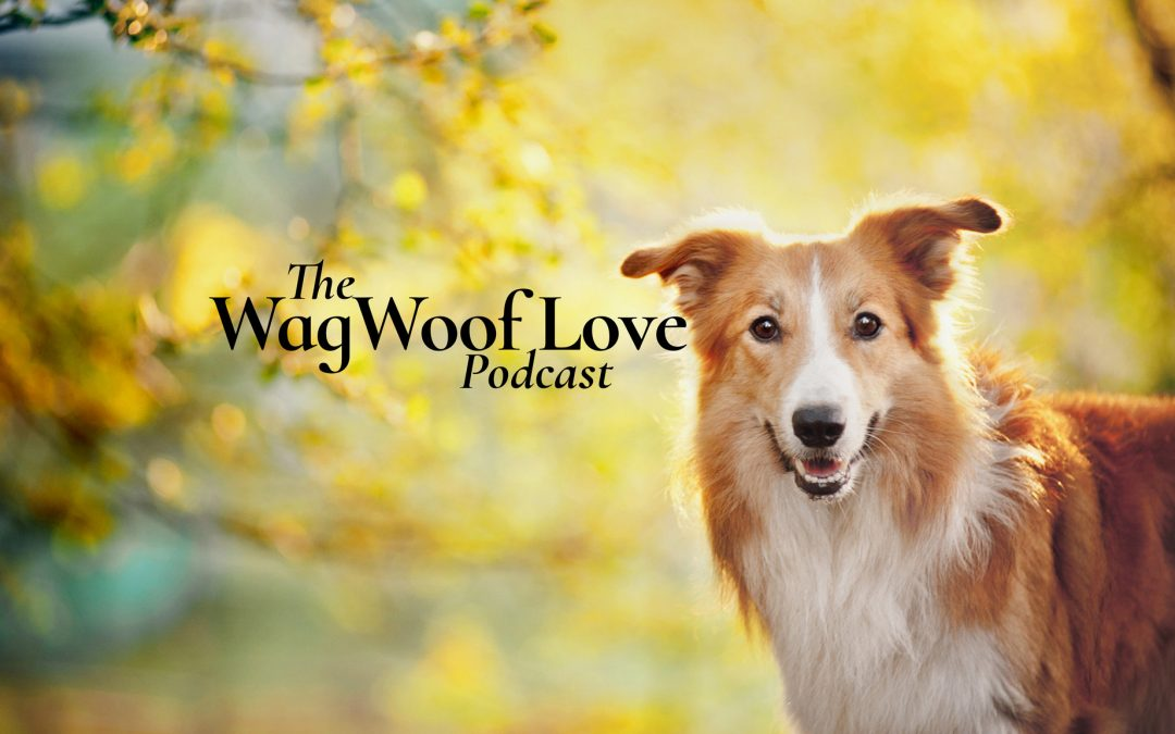 Wag Woof Love Podcast Trailer
