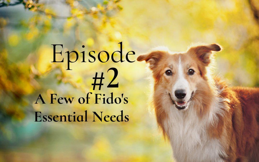 A Few of Fido's Essential Needs