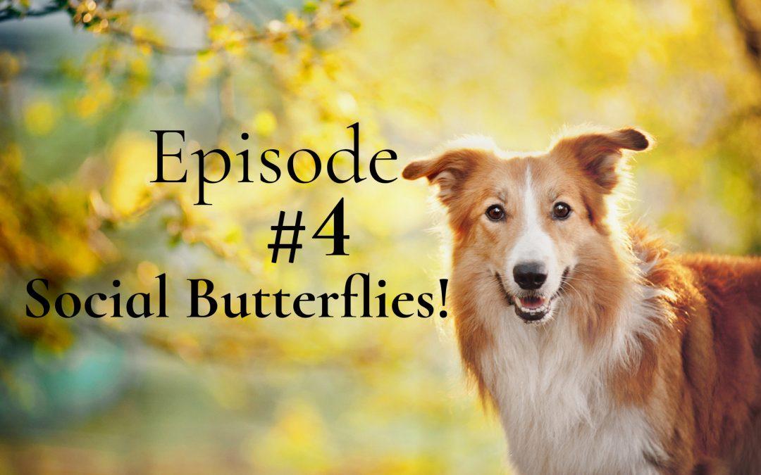 Social Butterflies!