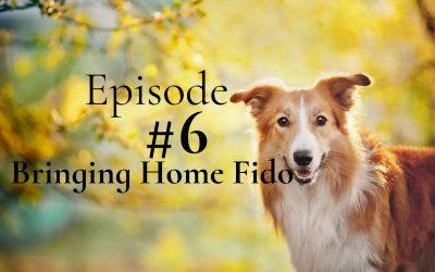 Bringing Fido Home!